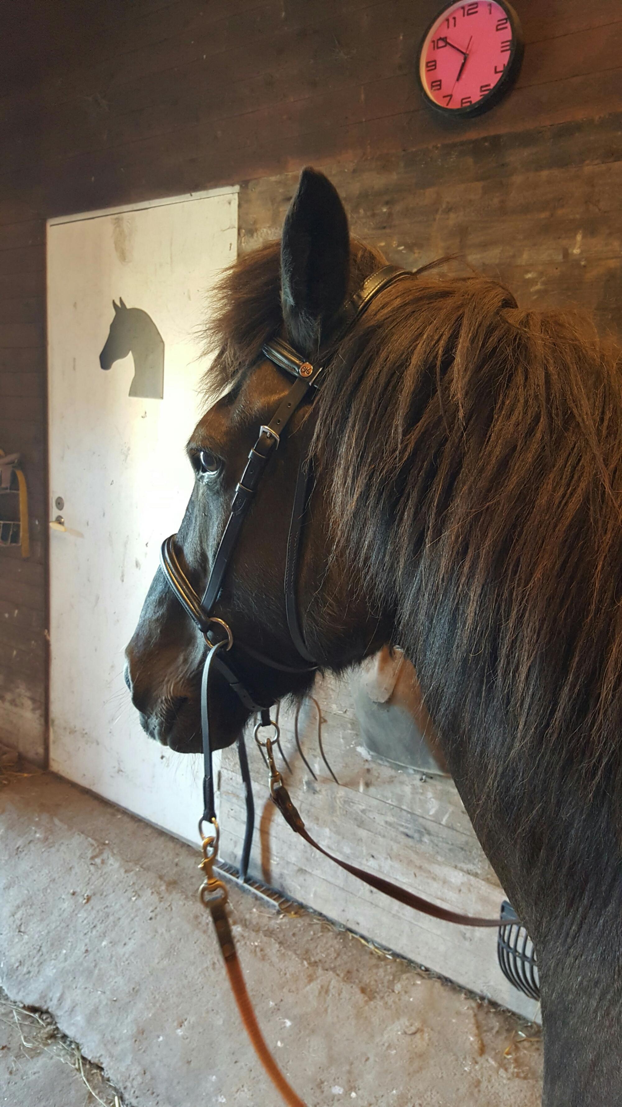 Ny häst i stallet