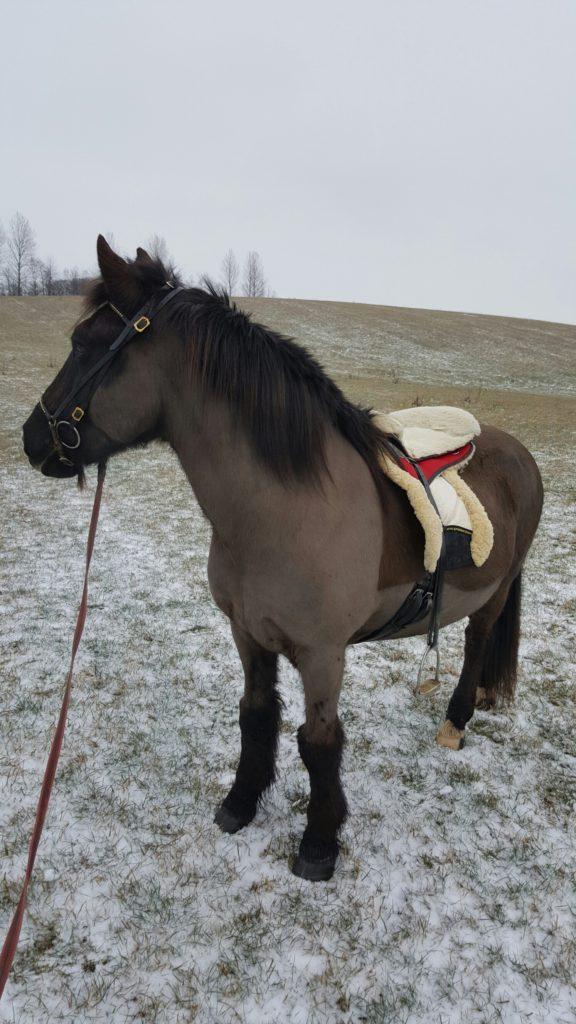 Kolkuosi hästar